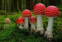 Nature - Fungi / The colorful fungi