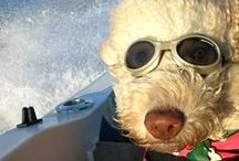 Pets on Deck / Boating is for families, pets included! / by Hurricane Boats
