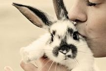 Rabbit love