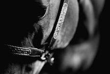 ...Horses ... / Люблю ...