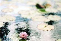 Цветы / ...