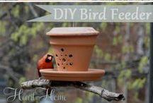 Linnujen ruokinta / Miten tehdä linnuille talipolloja ja linnun lautoja