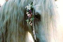 I love horseriding