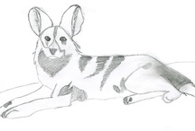 Fan Artwork  / Winners of the monthly Kids Zoowork Contest