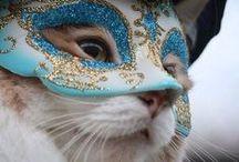 / Cats /