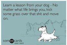 Perfectly Sound Advice