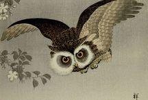 animal – bird 鳥