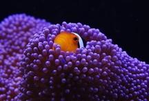 Hawaiian Wildlife / Colorful tropical fish and wildlife in Hawaii