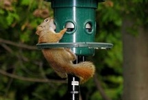 Wanna be Birds / Our bird feeders are so popular, they attract more than just birds. Don't believe us, see for yourself in these pictures.  / by Brome