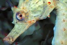 fishy / by Suzan Zahavi