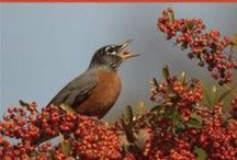 Great Backyard Bird Count / February 14-February 17, 2014 Fun for the Whole Family / by Brome
