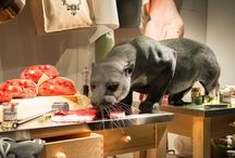 Animals / Animals featured in Retail Display across the globe. The retail industries very own virtual Noah's Ark.