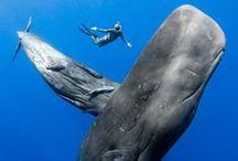 Marine Conservation / The worlds finest wilderness lies beneath the waves