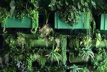 E x o t i c  G a r d e n s / Beautiful, tropical paradise world ♡