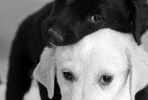 zwierzęta ;)