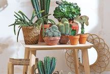 Cacti, plants and flowers / Cacti and plants decor ideas for your home or garden. Inspiration and DIY.