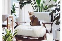 Just for Pets / We say: let the dog (and cat) on the sofa! See some of our favorite pets striking a pose on all things mid century modern, and learn how to make your furniture as pet-friendly as possible.
