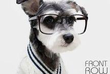 MEME'S AND FUNNIES AND SUCH / Just have a look, keep smiling... lots of kids with glasses, dogs with glasses, other small furry animals with glasses... Lots of glasses, jokes about glasses, ect...