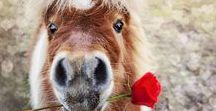 horses-konie