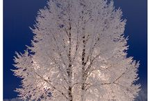 Outdoor scenes / by Kathy Packman
