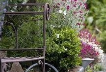 Garden inspiration / gardening