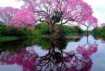 I LOVE TREES !!! / by Heinz Malert