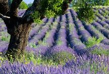 ✿⊱ Reizen Frankrijk : Provence / I pin for personal interest only. I don't claim copyright or ownership of any content on any of the boards. I will not be responsible for any copyright infringement.