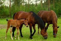 Horses / My horses, Asta, Fenno & Valle