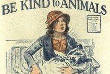 animal cruelty must stop