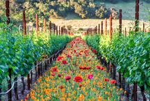 Wine - Great Wine Makers / Great #wineries in California