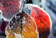 Autumn Bliss / Autumn photography
