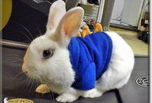 Pet of the Day / Pets from PetoftheDay.com - birds, bunnies, cats, dogs, ferrets, fish, gerbils, goats, guinea pigs, hamsters, horses, iguanas, lizards, mice, pigs, ponies, rats, snakes, turtles, and more. / by Pet of the Day