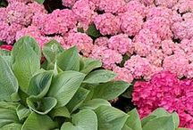 Landscapes / Gardening designs, ideas, and landscaping.