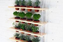IN BALCONY / Balcony and container gardening