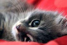 Kittens. Nothing but tiny kittens. / Have a kitten break. You've earned it. New kittens every day! / by Butterwort
