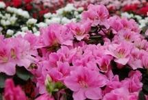Greenhouse & Plant Care