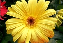 Beautiful Blooms / Photos of flowers from area gardens and our greenhouse