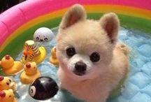 Cute / cute baby animals, babies, cutness