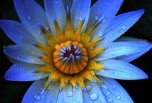 Flower Power / by Organizing Made Easy, LLC