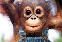 Cute Animal / by Forward Mail