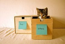 cats in boxes. / because cats in boxes make me smile / by Erin Young