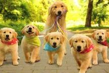 Puppy Love ♥