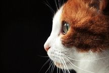 Cat / cats, cats and more cats