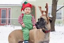 Holiday Pets / Pet costumes and wardrobes for the stylish holiday dog and cat