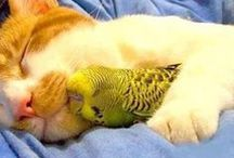 Unlikely Animal Friends / Different pets and animals getting along. Dog and cats attracted to other species