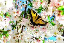 • Season Spring • / #spring #easter