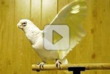 Funky Bird shows you how to shake your tail-feathers!!