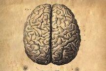 Psych & Neuro <3 / by Sydney Lang