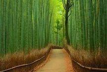 Travel: Japan.