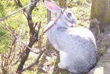 Animals in my garden / Un bel coniglio nel mio giardino. A cute rabbit in my garden.
